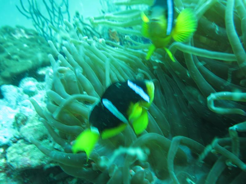 scuba diving with nemo diving center