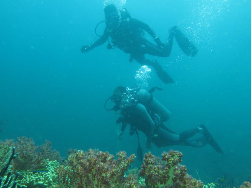 scuba diving with nemo diving center