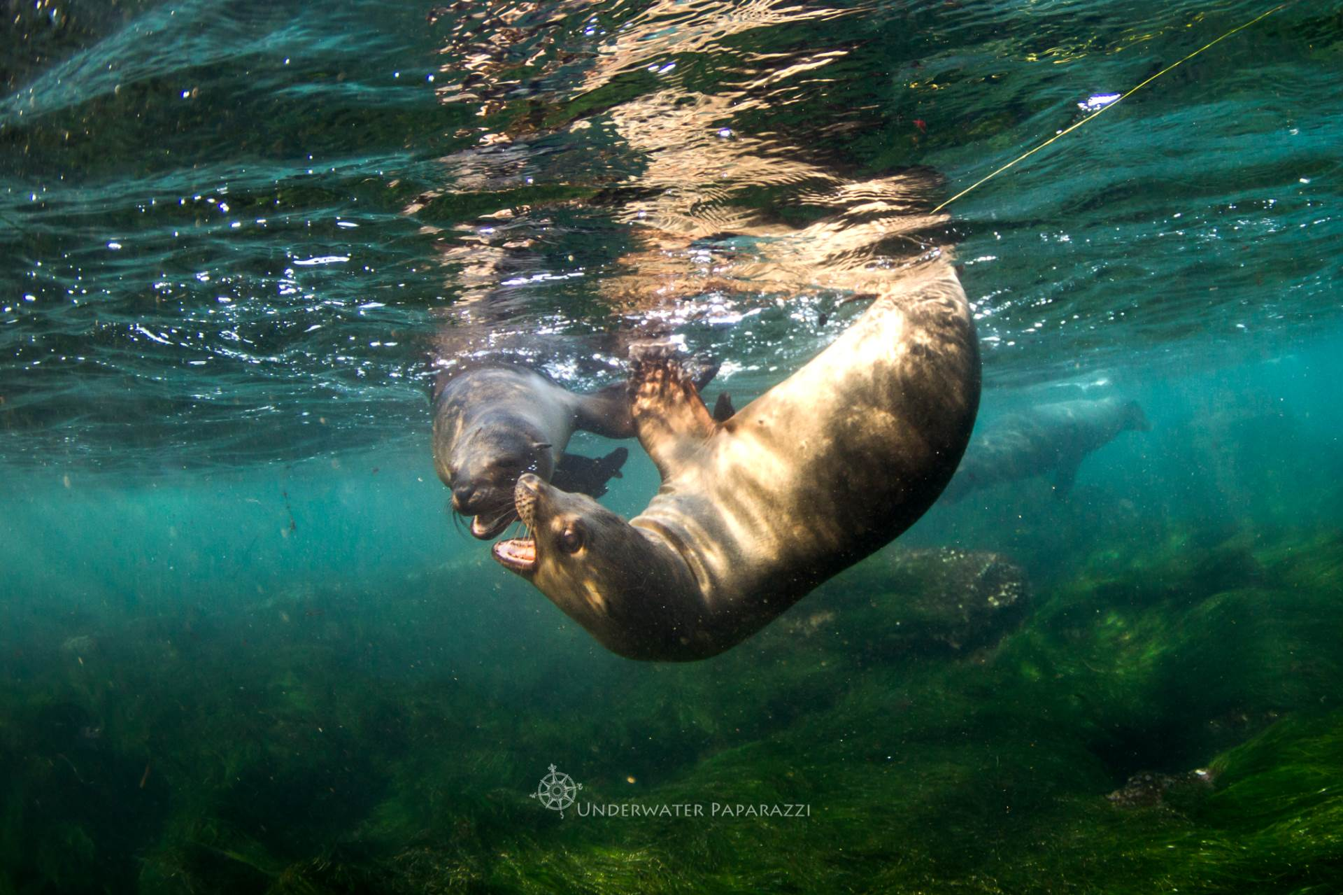 Playful sea lions at the cove!