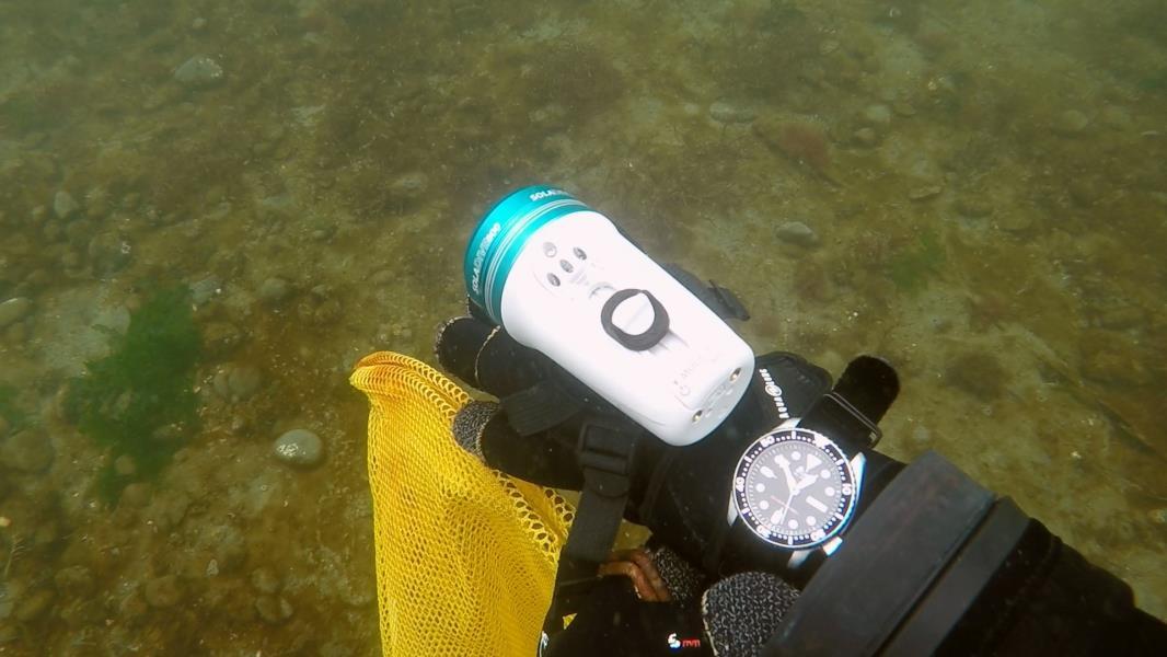 Seiko-SKX007-underwater