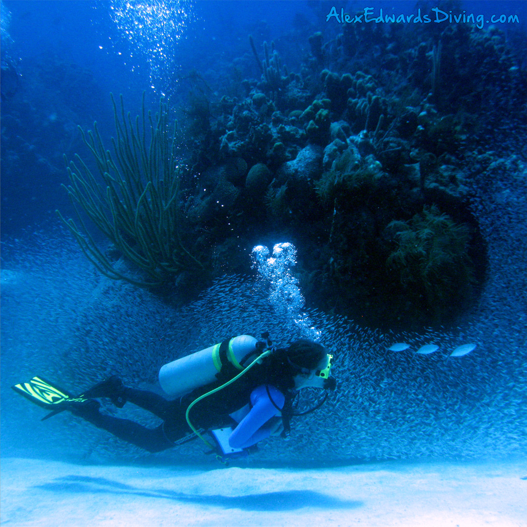 Diving with a giant school of silversides at Half Moon Caye Wall in Belize.