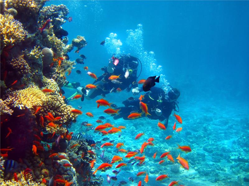 Similan Islands Underwater