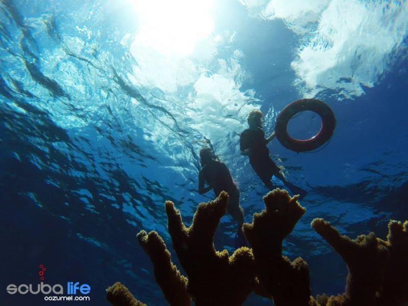 Snorkeling Cozumel with Scuba Life Cozumel