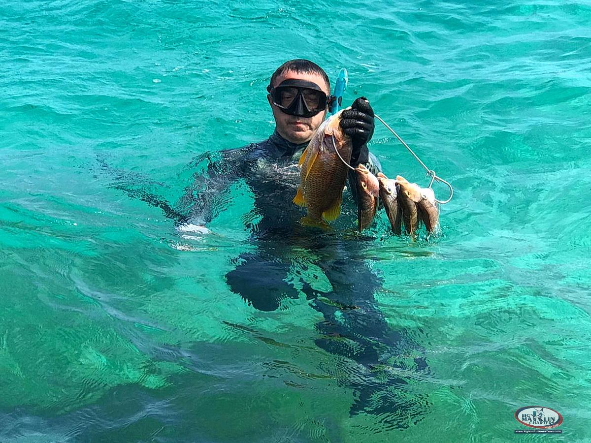 Spearfishing Punta Cana