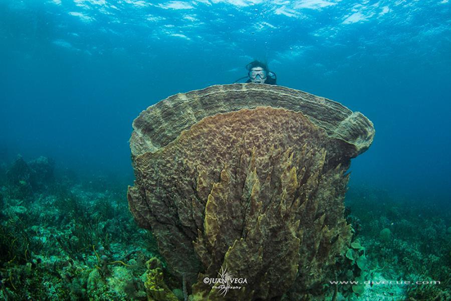 Sponge Barrel