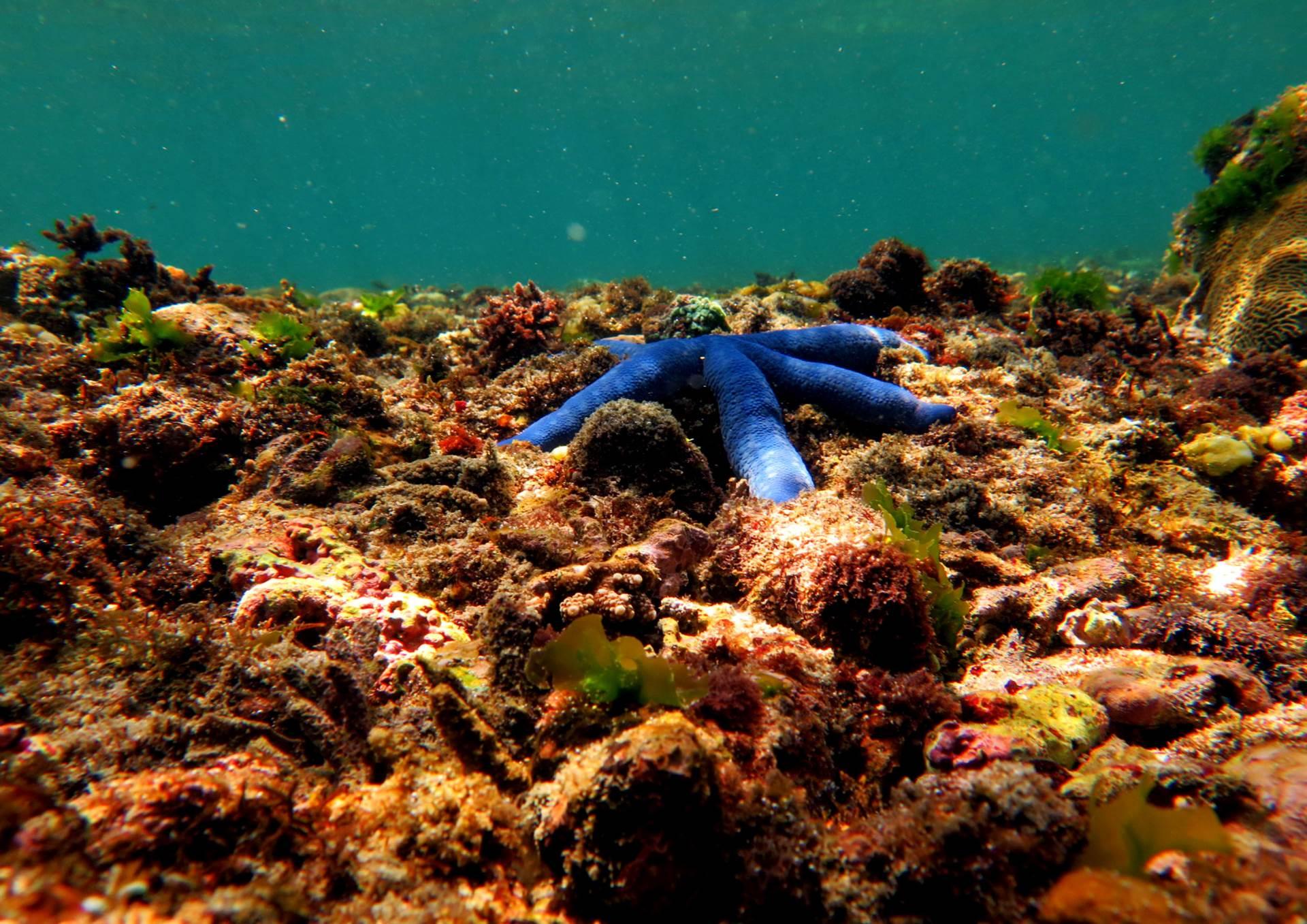 Blue Starfish under Nusa Lembongan Island