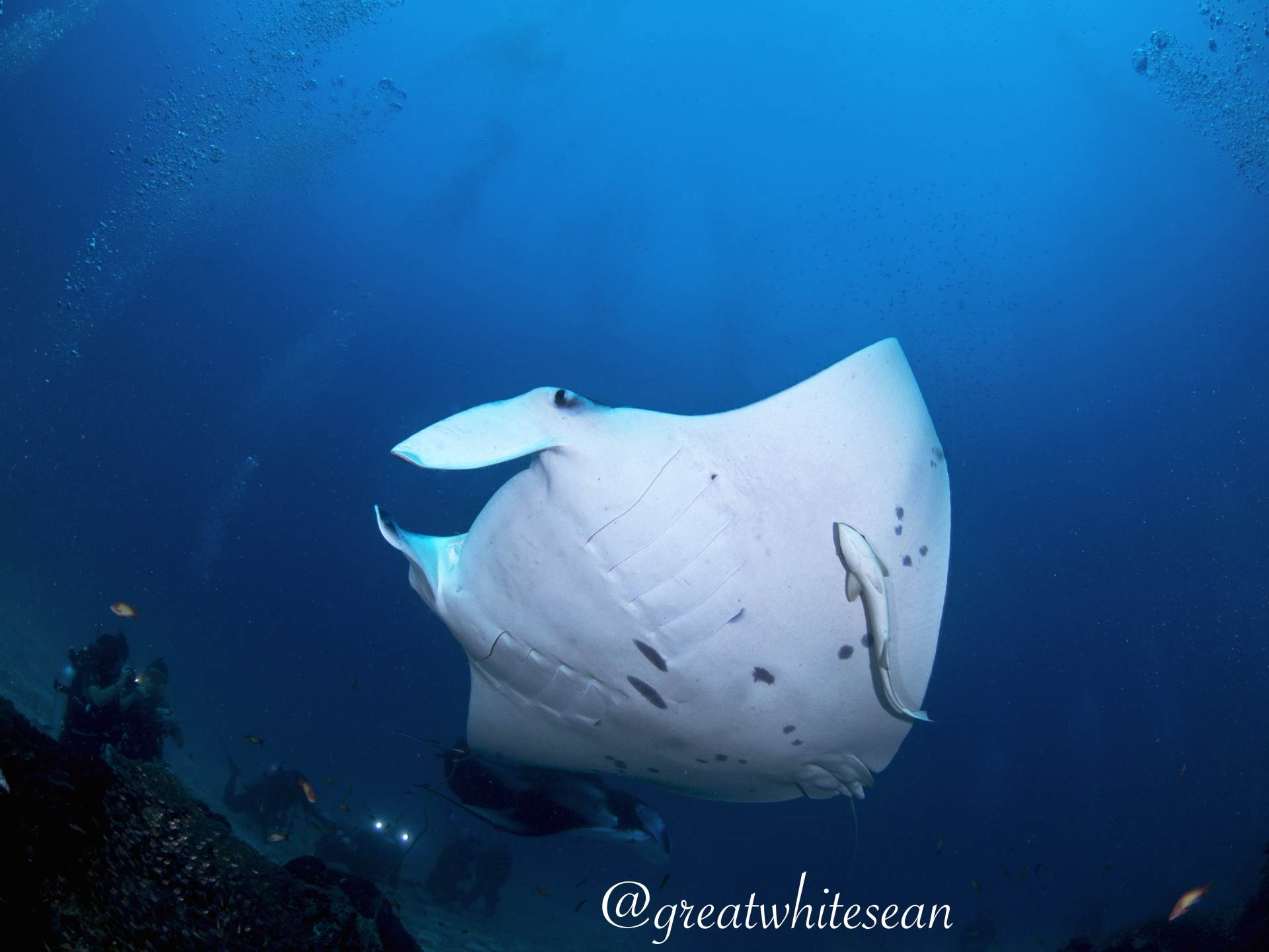 Divers enjoying the show put on by 2 mantas at a cleaning station in the Maldives. This was my 1st ever dive in the Maldives and what a special moment