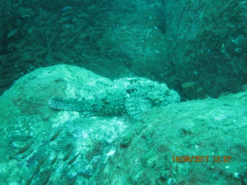 Stonefish!