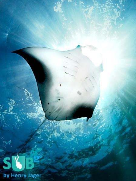 Sun Diver - Manta Ray