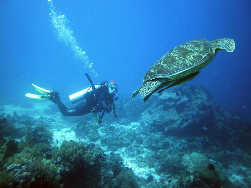 Tauchen auf den Philippinen http://sipaway-divers.com