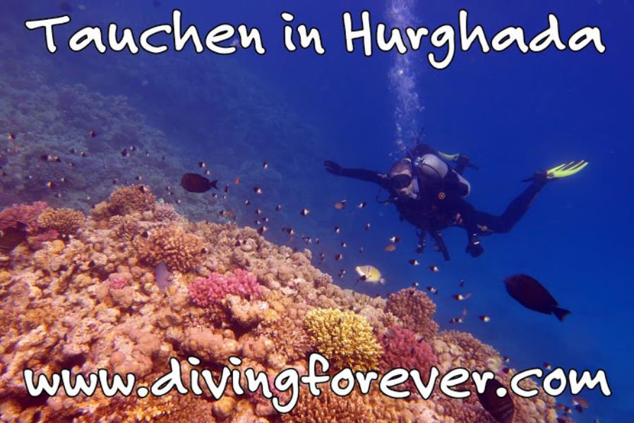 tauchen hurghada  www.divingforever.com