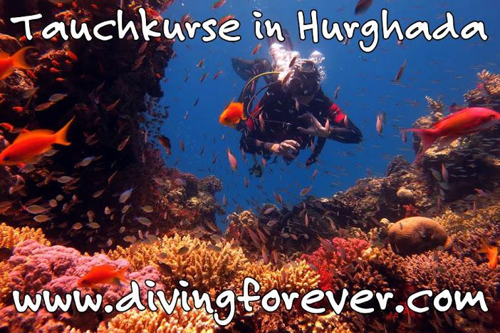 Tauchkurse Hurghada Wenn Sie einen Tauchkurs in Hurghada sowie den Tauchschein in Hurghada machen, bedeutet das nicht Tauchen im Schwimmbad, sondern Sie erleben die Farbenvielfalt der Korallen und Fische unserer Unterwasserwelt. Sie werden sehen, Tauchen macht Spaß und das für immer!   Open Water Diver Kurs   Der Open Water Diving (OWD) Kurs ist der erste Schritt, wenn Sie ein Taucher werden wollen. Folgendes Programm wird in einem viertägigem Kurs absolviert: DVD und Tauchgang im Schwimmbad oder seichtem Platz im Meer am 1. Tag, die anderen Tage verbringt man mit einem Ausflug auf dem Boot. Die maximale Tiefe beträgt 18 m.   Advanced Open Water Diver Kurs   Voraussetzung für einen Advanced Open Water Diver ist der Open Water Diver Kurs. Der AOWD bietet die Möglichkeit unter Aufsicht Ihres Guides mehr Tauchgänge zu bekommen sowie auch das Selbstvertrauen unter Wasser zu steigern. Neue Fähigkeiten und Erkenntnisse rund um das Tauchen, Tiefseetauchen, Wracktauchen, Nachttauchen, ... werden erlernt. Hier beträgt die maximale Tiefe 30 m.