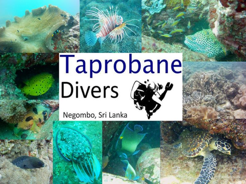 Trincomalee photos - now moving to Negombo