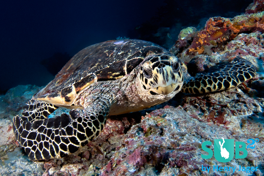 Kandooma Caves is a beautiful dive spot rich in marine life. Turtles are frequently seen there.