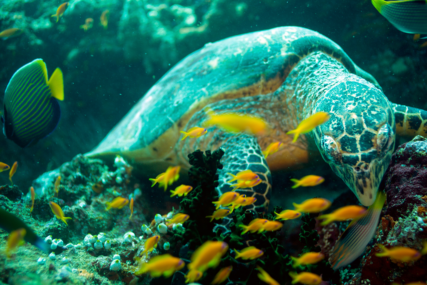 One of the best Thilas I have been on in the Maldives. Epic dive with 5 turtles.