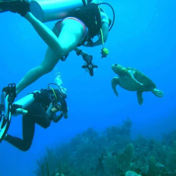 Turtle helping survey the reef