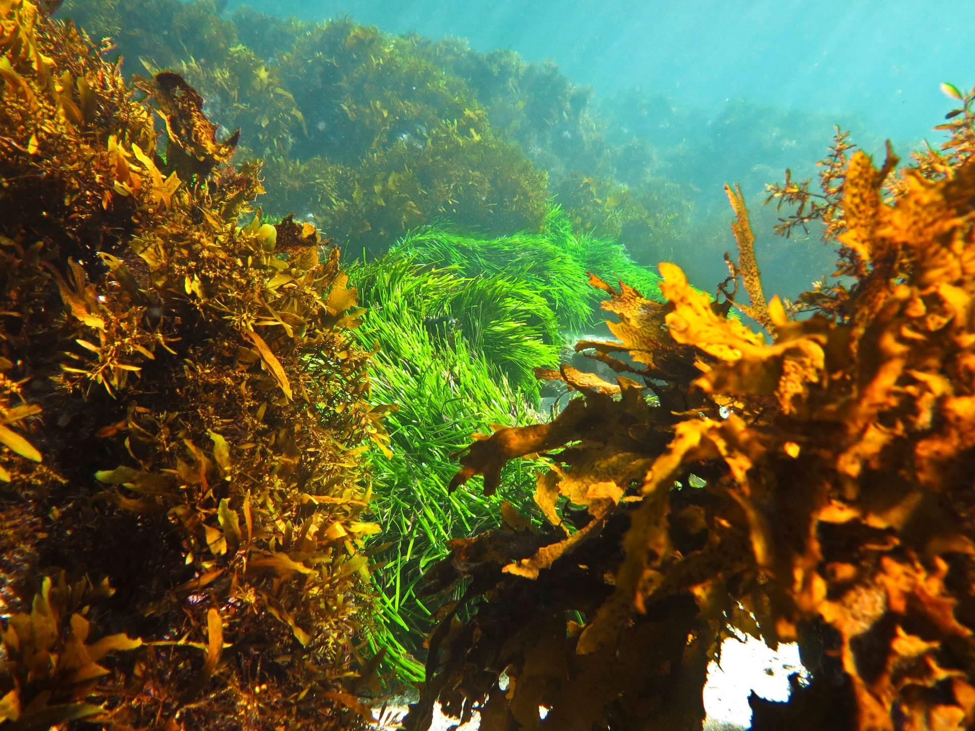 Cabbage Tree Bay Underwater Garden
