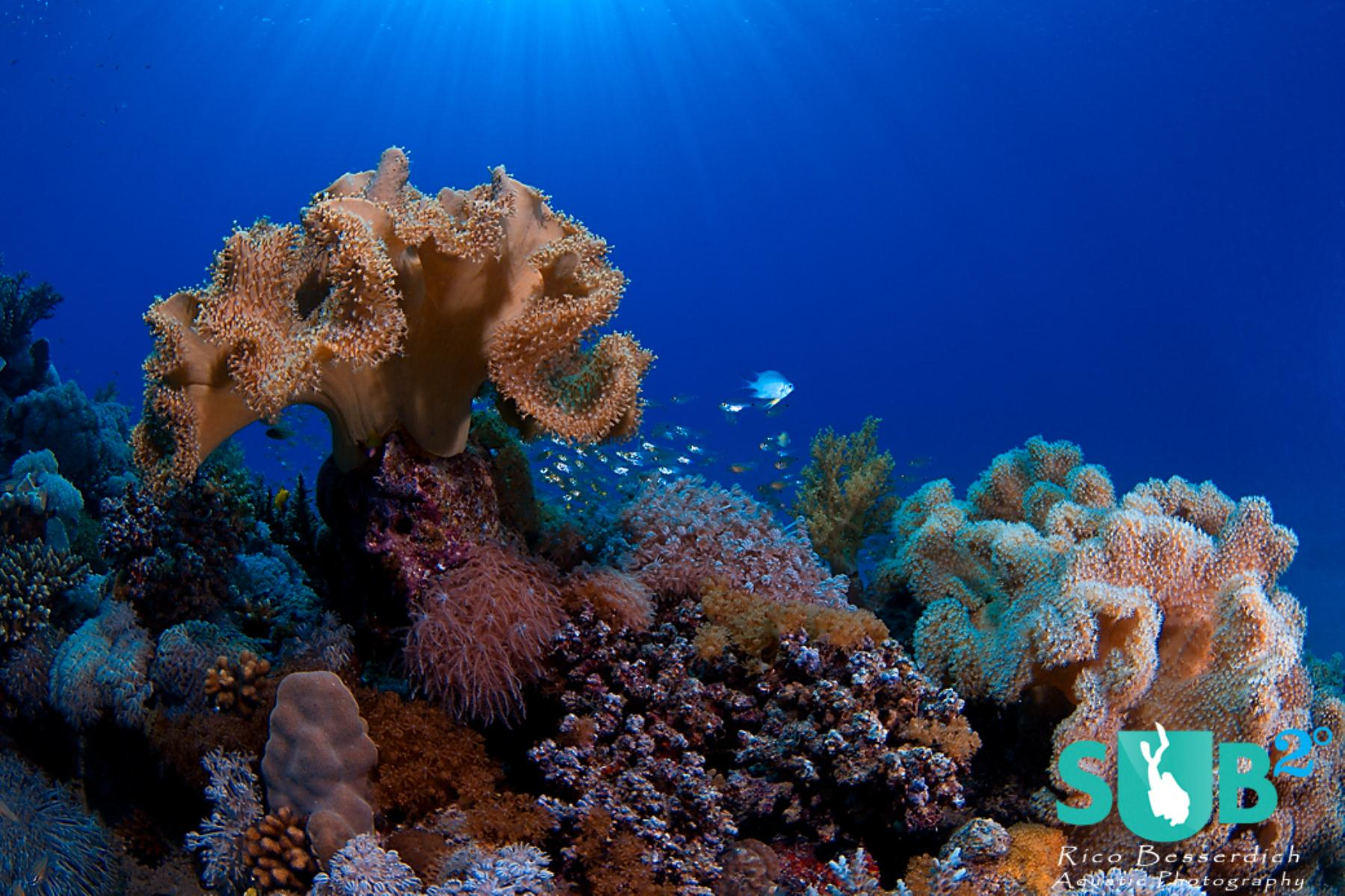Corals are great subjects to start with for uw image composition according to the rule of thirds.