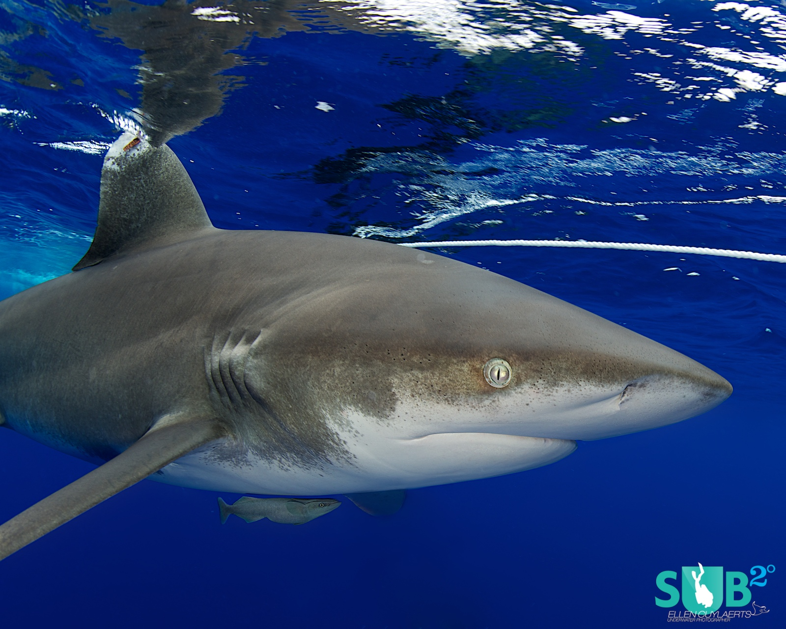 To encounter a shark this close is an opportunity not given to everyone! Enjoy the moment and stay alert!