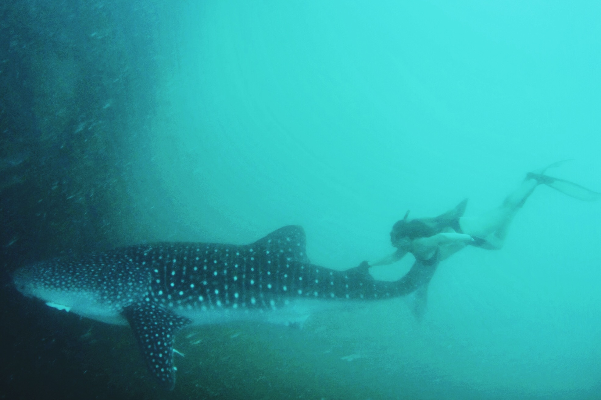 THIS PICTURE WAS TAKEN BY MY FATHER WHILE WE WERE FREE DIVING IN THE NORTHERN BEACHES OF PERU WITH WHALE SHARKS.