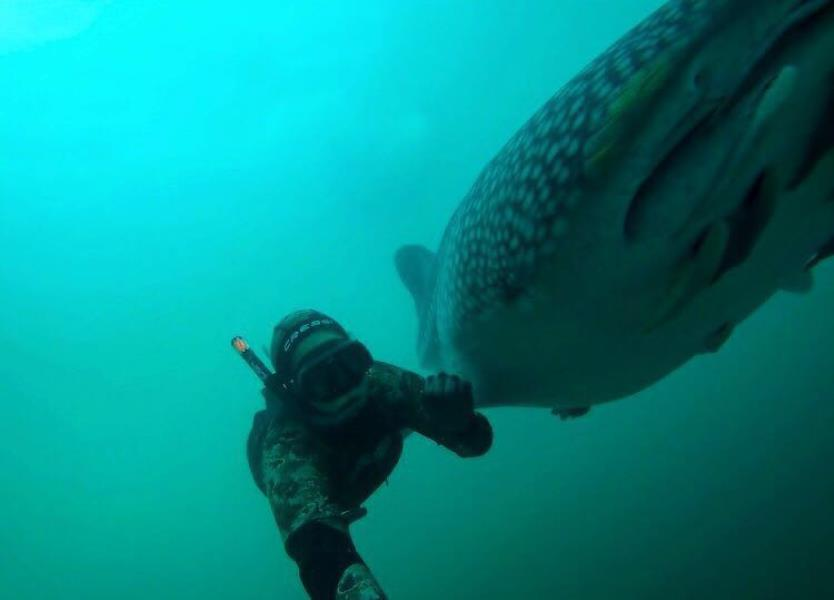 Whale shark selfie