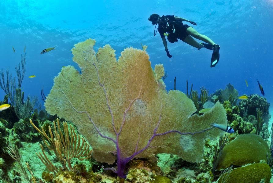 www.cruise-maldives.com coral