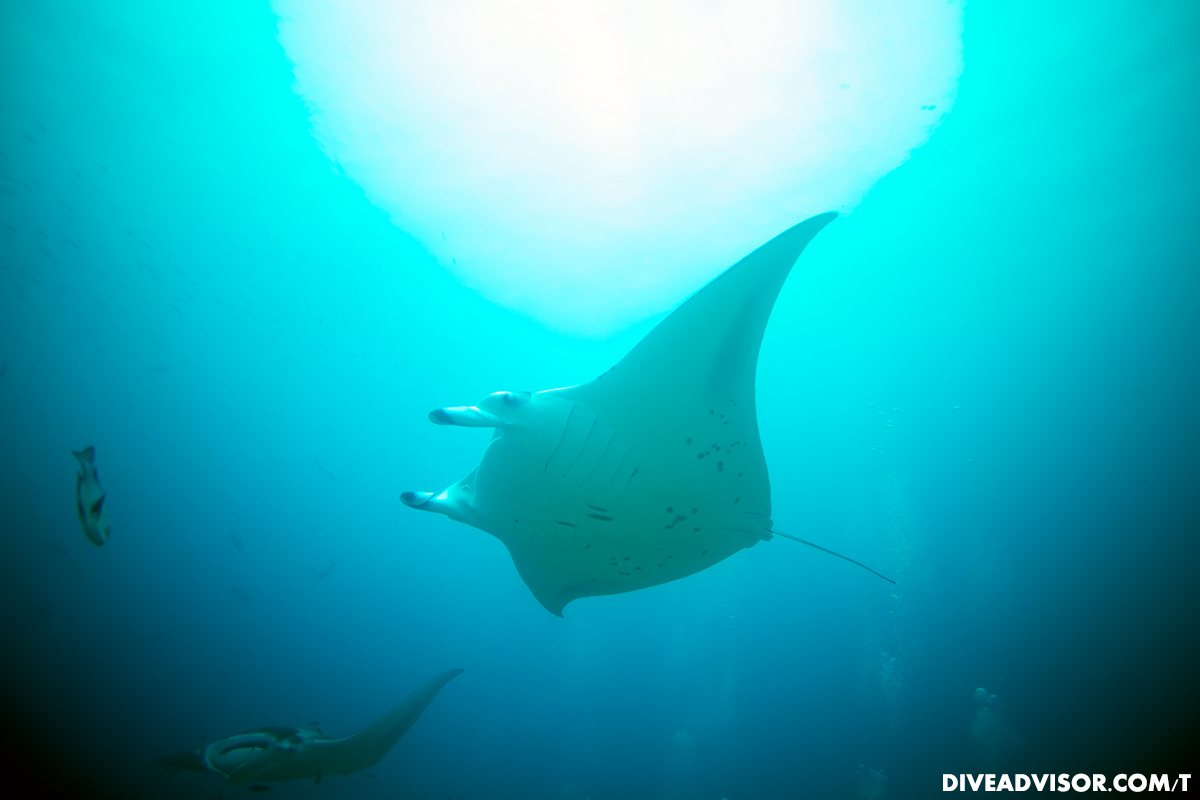 You can never get enough of manta's.